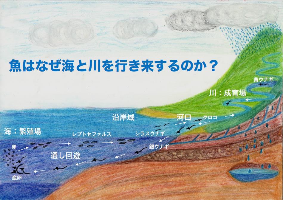 魚はなぜ海と川を行き来するのか?