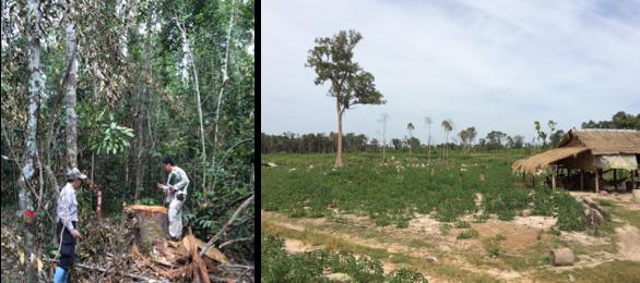 熱帯林を守る国際的な仕組み REDD+
