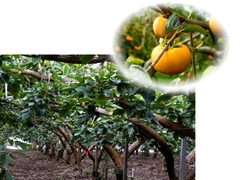スマート農業で中山間地域の生産性向上を目指す