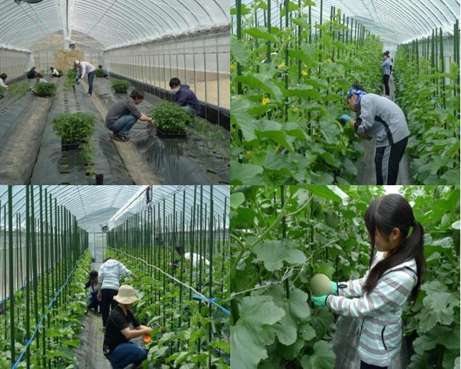 次世代農業に向けた「なら近大農法(ICT農法)」の取り組み