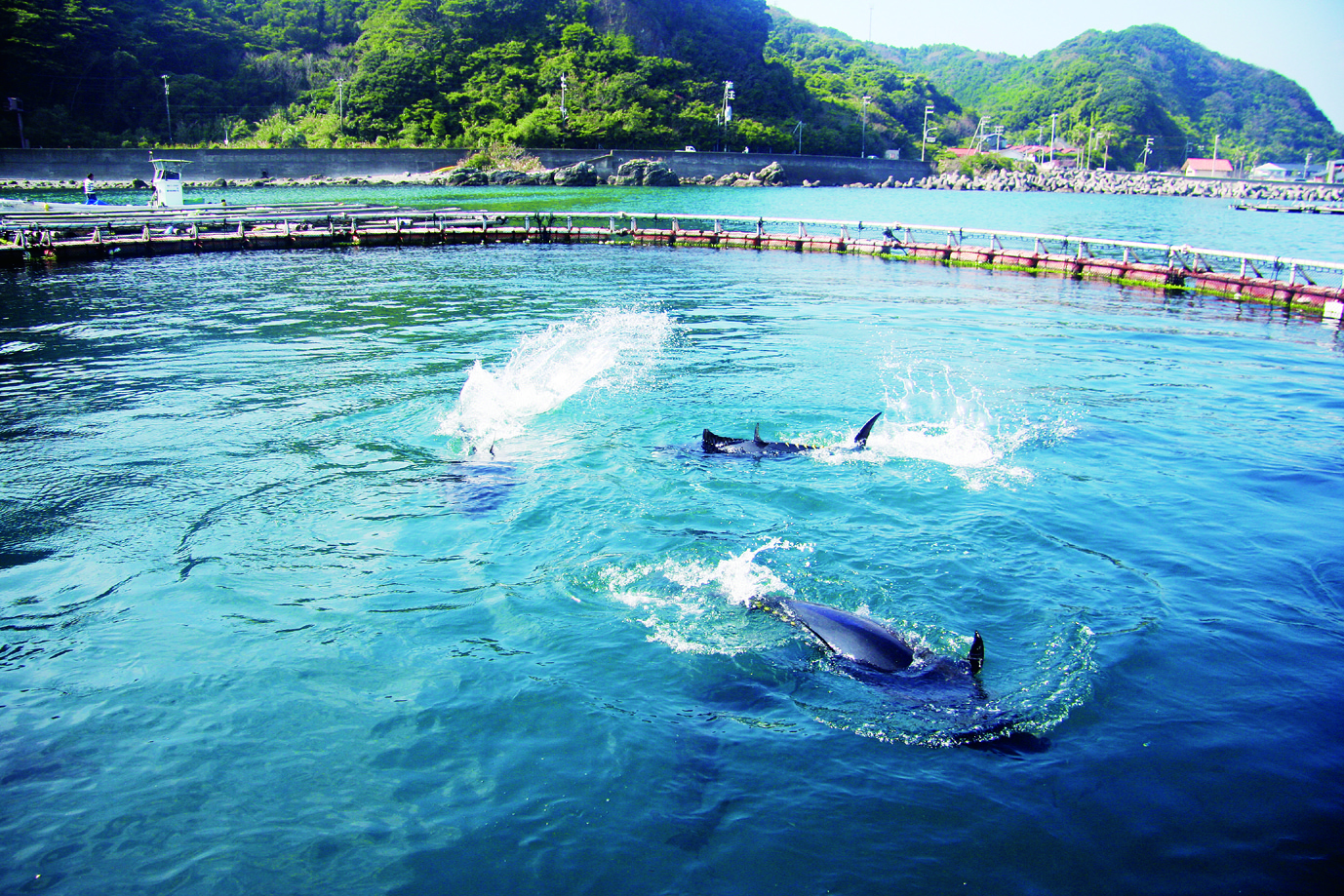 Japan Moving to Lower Catch Limits
