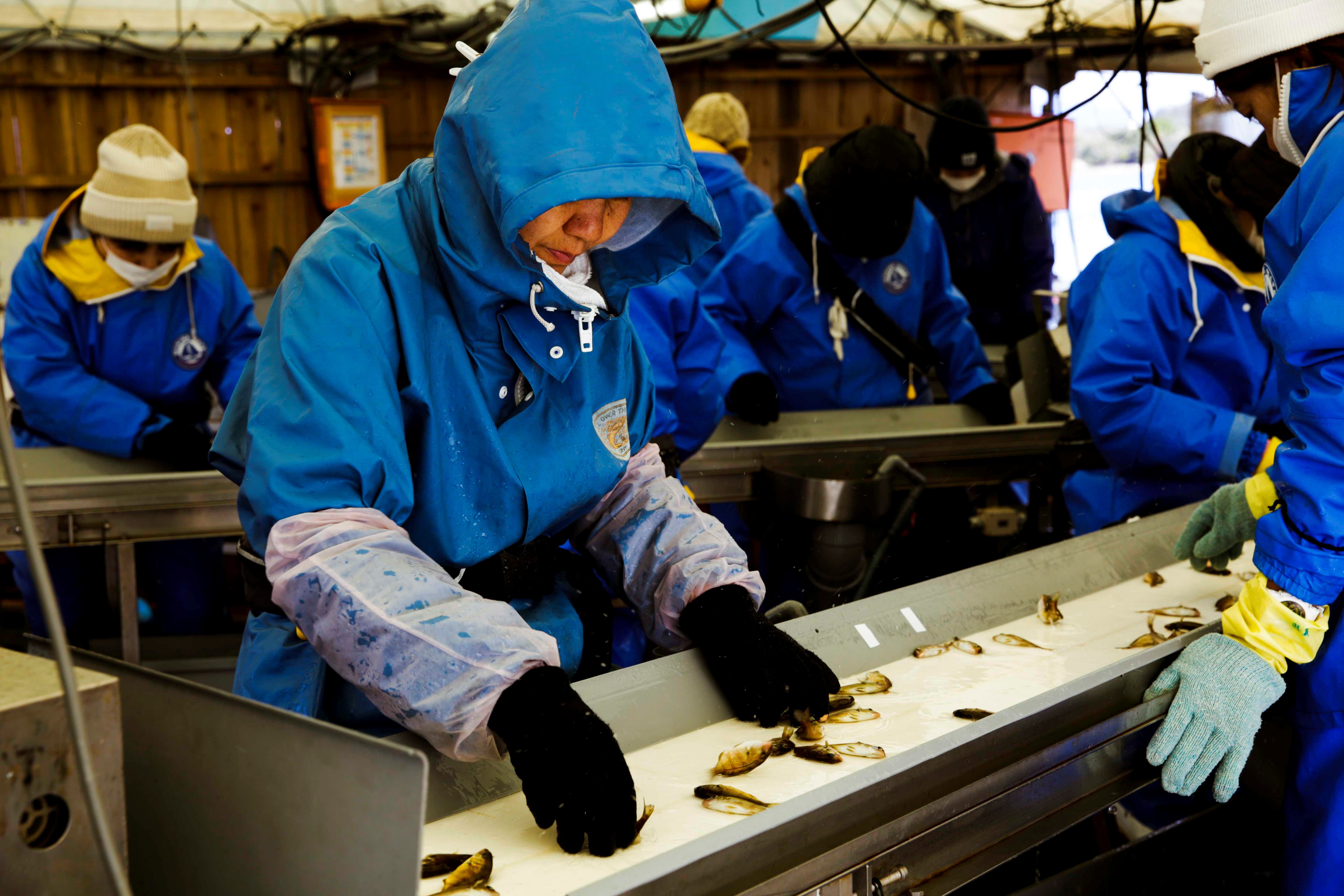 Pumped up automation: Fish farming in Japan adopts a new AI and IoT solution (Source: Microsoft Asia News Center)