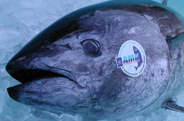Fully Farmed Japanese Tuna Heading to Overseas Markets (Source: Nikkei Asian Review)