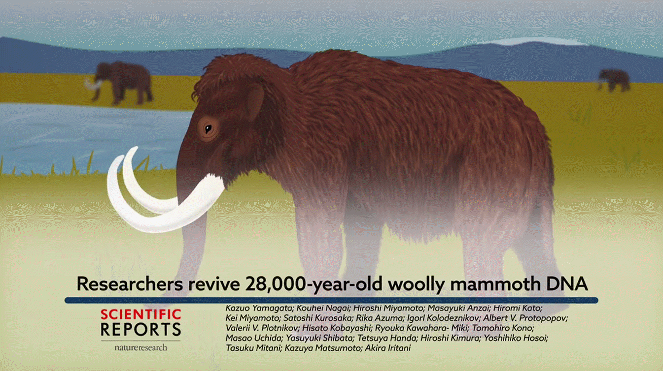 Signs of biological activities of 28,000-year-old mammoth nuclei