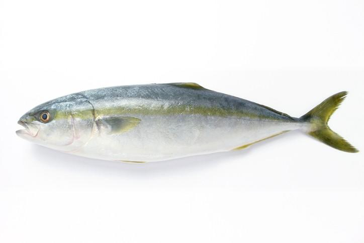 Calysta: Use of novel protein meal in yellowtail diets does not hinder growth performance (Source: feednavigator.com)