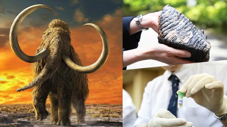 Scientists Are Trying to Revive Woolly Mammoths With CRISPR (Source: Interesting Engineering)