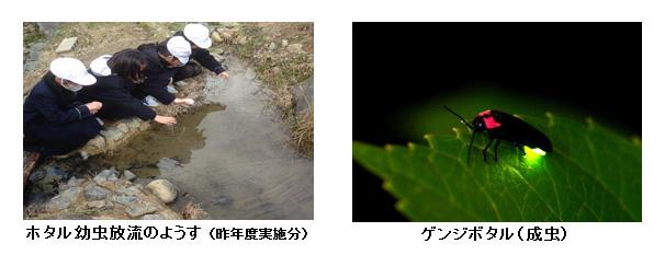 3/2(月)近畿大学附属小学校4年生112人が ゲンジボタルの幼虫を放流 6月にはホタル観賞会を開催予定