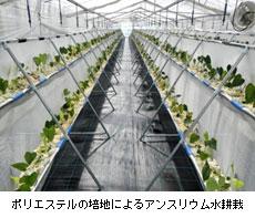 """""""オール近大""""川俣町復興支援プロジェクト<br /> アグリビジネス創出フェアに出展(東京ビッグサイト)"""