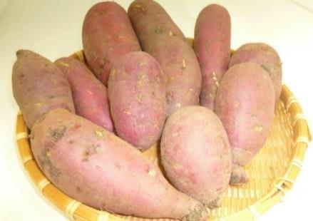 アグリビジネス実習 農産物販売~学生が手塩にかけて育てたサツマイモ・サトイモが店頭に~ 11/5日(木)から大丸京都店にて