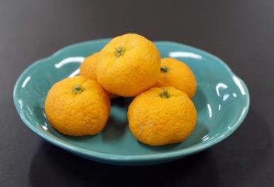 奈良県産の「大和橘(やまとたちばな)」を病院食として提供 農学部×医学部奈良病院「食事満足度向上プログラム」