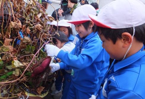 """""""オール近大""""川俣町復興支援プロジェクト サツマイモ空中栽培の収穫実習と実験授業"""