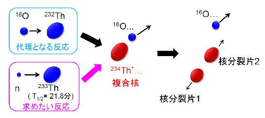 重イオン反応による新たな核分裂核データ取得方法を確立 ―核分裂現象の解明にも道―