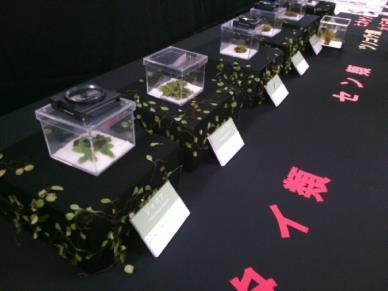 農学部「大和の里山 いきもの展」開催 12月21日、22日 レストラン「coto coto」にて