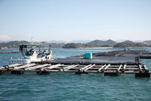 13カ国の在関西の外交官が水産研究所を視察 世界をリードする養殖研究の最前線を紹介