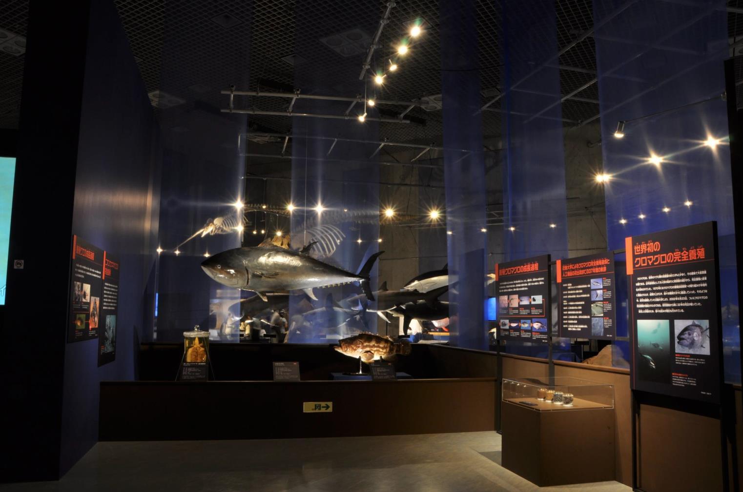水産研究所教授の家戸敬太郎が特別講演 東京・国立科学博物館で開催中「海のハンター展」 人気イベントで、近大マグロ誕生秘話を語る