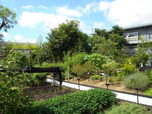「薬用植物園」一般公開&講演会 開催 参加者にはムラサキやベニバナの苗をプレゼント!