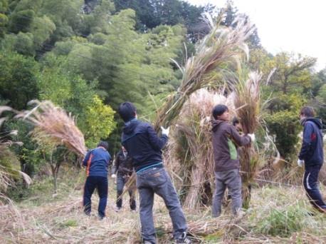 ススキ畑を作って茅葺き古民家を守る! 学生が挑む「かやぶき古民家保存・再生プロジェクト」