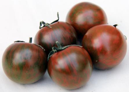 旨みの強いゼブラ柄のトマトを開発 近畿大学農学部×ナント種苗の共同研究による新品種「AMAZON」