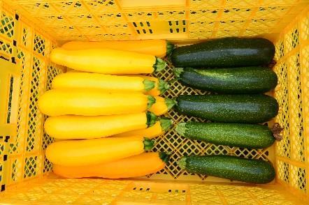 学生が実習で栽培した夏野菜を病院食として提供 アグリビジネス実習受講学生が「食事満足度向上プログラム」に協力