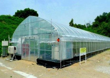 「なら近大農法」で栽培したミニトマトを初出荷 奈良県との連携事業「農の入口」モデル事業の一環として