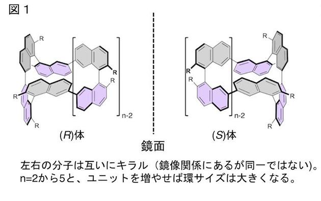 分子の大きさで円偏光発光の回転方向を制御できる環状キラル色素を開発