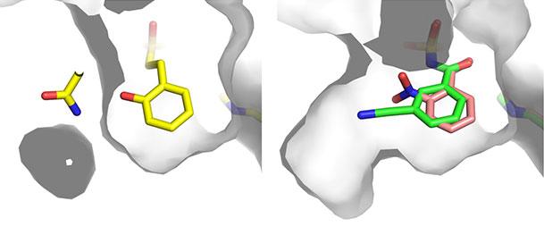 ペプチド医薬品の鍵を握る酵素を制御することに成功 薬剤耐性菌に対応する新薬研究開発への応用に期待