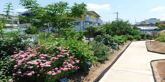 人気の薬用植物園見学会を今年も開催 「食養生~心と体を整える~」の講演も実施