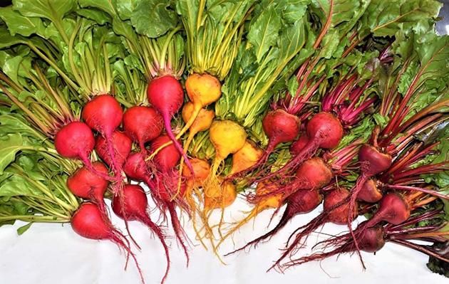 附属農場で栽培した野菜を病院食として提供 附属農場×奈良病院のコラボ