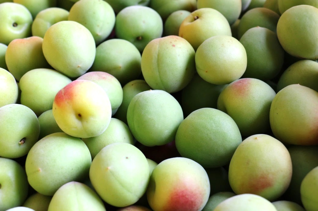 附属農場で栽培した南高梅を近大奈良病院の病院食として提供 旬の南高梅を使用したドレッシングの和え物