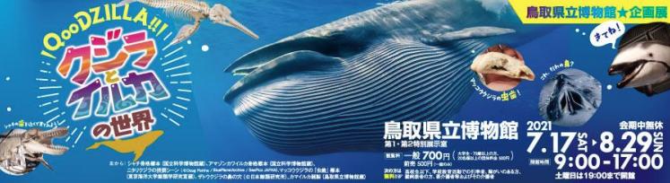 鳥取県立博物館企画展「クジラとイルカの世界」 農学部水産学科海棲哺乳類学研究室が展示協力