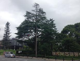 12/17(木)「あやめいけウィンターイルミネーション2015」20m級のクリスマスツリーが出現! 近畿大学附属小学校<br />