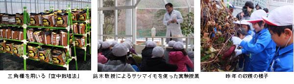 10/29(水)サツマイモ空中栽培の収穫実習と実験授業をおこないます