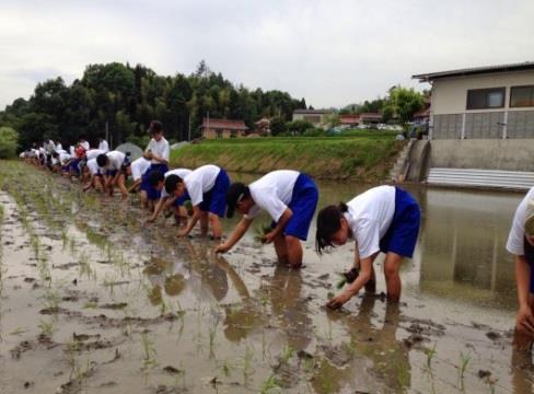 「食事への感謝の心」を育む、中学1年生の総合学習 稲作実習で田植えを体験