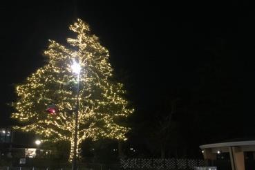 あやめ池ウィンターイルミネーション2017 点灯式 ~あやめ池遊園地時代から残るクリスマスツリー~