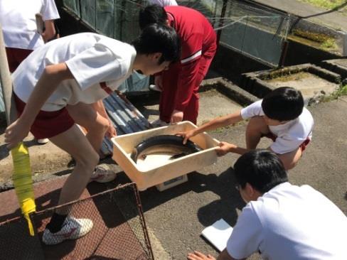 高校生が育てたチョウザメから初のキャビア 近畿大学水産研究所の教員から学ぶ「水産養殖基礎講座」