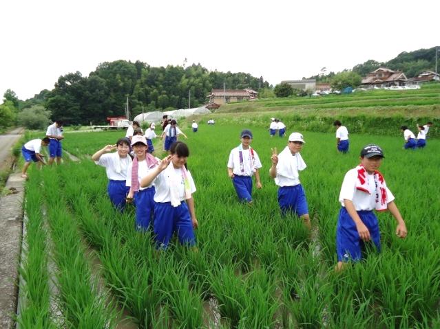 稲作実習で除草作業を体験 地域とのつながり、感謝の気持ちを育てる総合学習